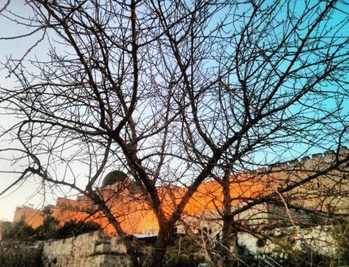 הר הזיתים כמקום שרפת הפרה האדומה