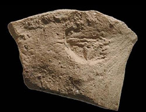 A Stamped Jar Handle Fragment