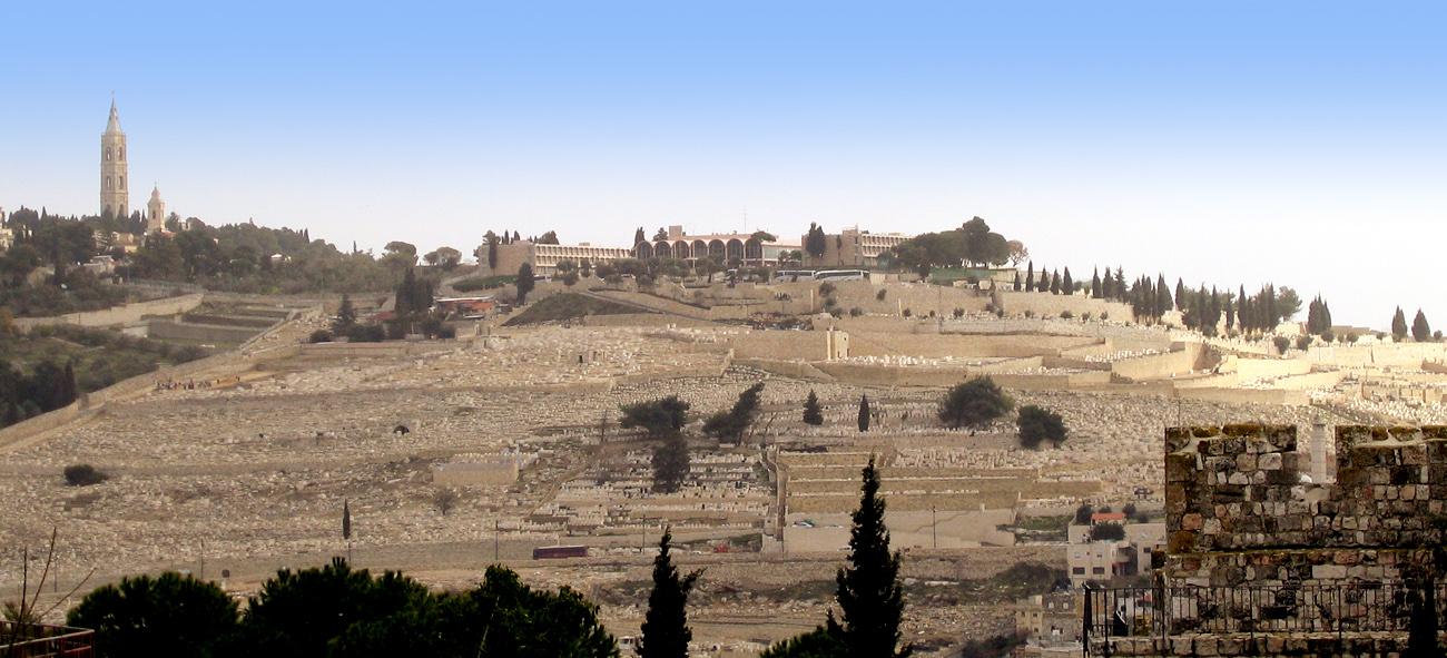 הזיתים 2007