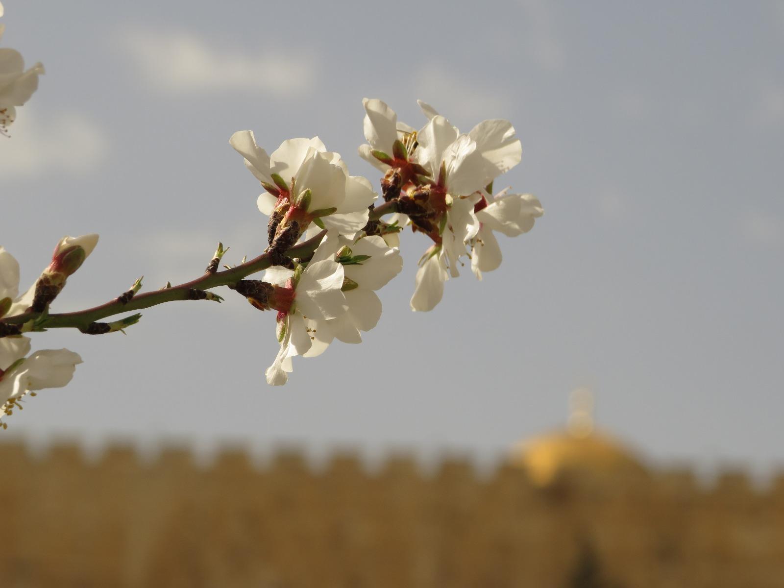 """חגיגות ט""""ו בשבט בתצפית של ירושלים"""