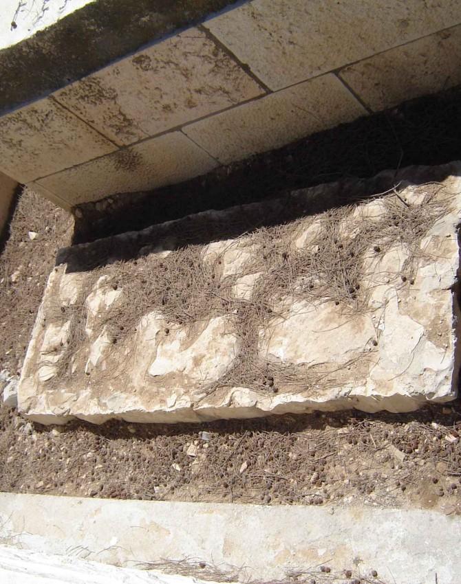 תמונת קבר אריאל אליהו