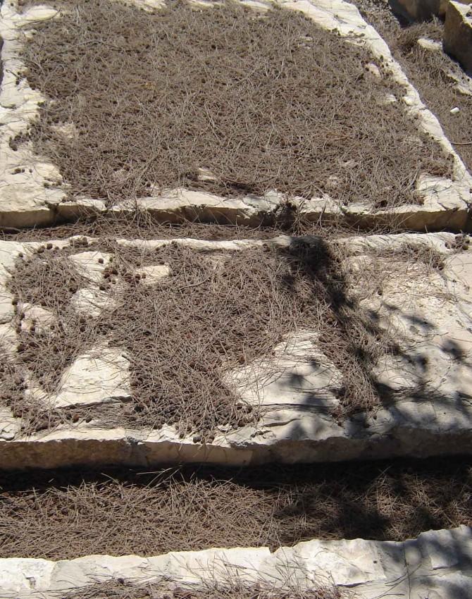 תמונת קבר מנחם סאלים שלמה